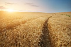 Road through wheat field stock images