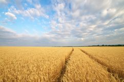 Road through wheat field royalty free stock photography