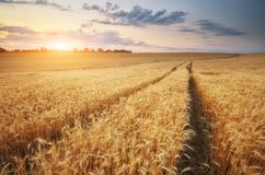 Road through wheat field royalty free stock images