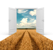 Road through wheat field. In opened door Stock Images