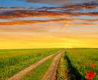 Road in wheat field. In the sunset Stock Photos