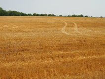 Road in the wheat field. Stock Image