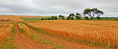 Road through Wheatfields at St Margarets at Cliffes in Great Britain Stock Photography