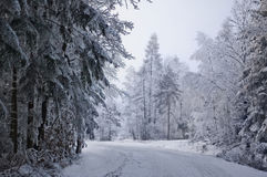 Road in white forest. Winter.  A route in forest Royalty Free Stock Photo