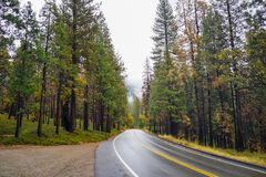 Road into the Wild. Road into a forrest at Yosemite National Park Royalty Free Stock Images