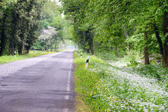 Road through a wild garlic (ramson) forest in blossom Royalty Free Stock Photos