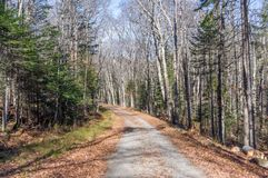 Road through the wilderness. At santanoni great camp Royalty Free Stock Image