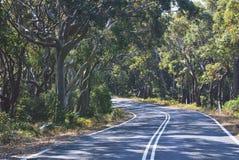 Road winding through Australian Eucalypt forest Stock Image
