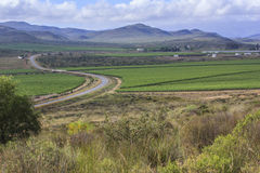 Road winding through the vineyards. Near Robertson - South Africa Royalty Free Stock Photo