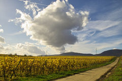 Road in wineyards. Clouds over the road in wineyards, Germany Royalty Free Stock Photography