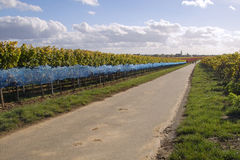 Road in wineyards. A walk along the road in wineyards Royalty Free Stock Photo