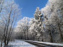 The road in winter Royalty Free Stock Photo