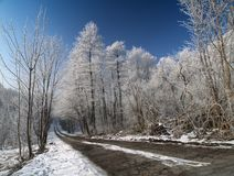 The road in winter Royalty Free Stock Images