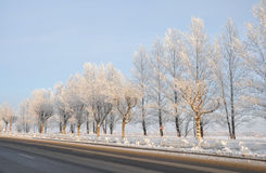 The road in the winter. Snow-covered trees along the road. Winter stock photography