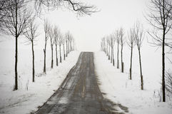 Road at winter Stock Image