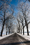 The road in winter. The empty road in snow Royalty Free Stock Photography