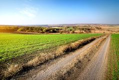 Road through winter crops Stock Image