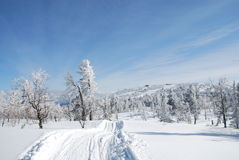 Road in winter forest. Near Sheregesh mountains Stock Photo