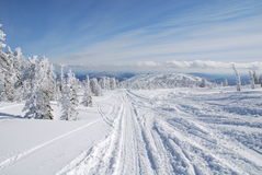 Road in winter forest. Near Sheregesh mountains Royalty Free Stock Photo