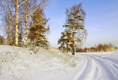 Road through the winter forest Stock Image