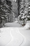 Road through the Winter Forest Royalty Free Stock Photo