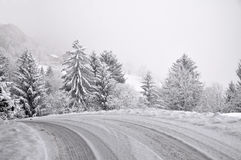Road through the Winter Forest Stock Photography