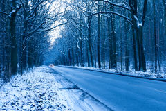 Road in winter forest Royalty Free Stock Photo