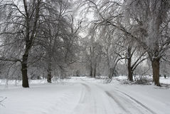 Road Through Winter Forest Royalty Free Stock Photography