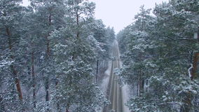 The road in the winter forest. stock footage