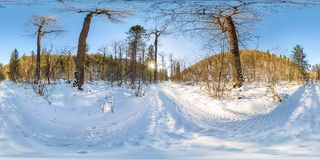 Road in the winter forest at dawn. Spherical 360 VR 180 panorama.  stock image