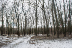 Road in the winter forest during february Stock Photography
