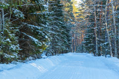 The road in the winter forest. Stock Photography