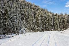 Road in the winter forest. Winter rural landscape in the Carpathian mountains Royalty Free Stock Images