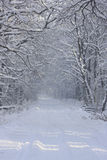 Road in winter forest. Snow-covered road in the forest in the morning Royalty Free Stock Image