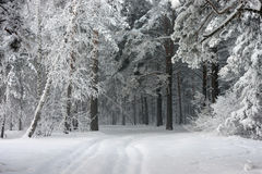 Road in the winter forest Royalty Free Stock Photography