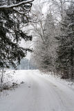 Road in winter forest with snow-covered trees on a cloudy winter day Stock Image