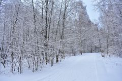 The road in the winter forest with snow immediately became beautiful. All the trees were covered with a thick blanket of snow stock photos