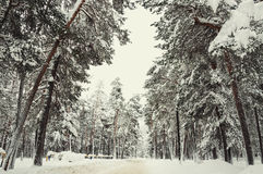 Road in a winter forest after snowfall. Stock Photography