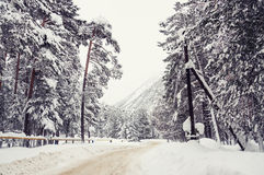 Road in the winter forest after snowfall. Stock Photography