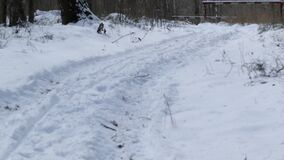 Path in the forest. Road in the winter forest, a trace on the snow from cars stock video footage
