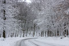 the road in the winter forest and trees in the snow on a cloudy day royalty free stock photos