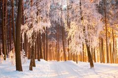 Road in winter forest. Winter landscape. stock image