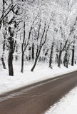 Road in winter forest Stock Images