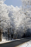 Road in winter forests Stock Photography