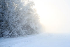 Road at the winter landscape in the forest Royalty Free Stock Photo