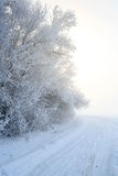 Road at the winter landscape in the forest Royalty Free Stock Images