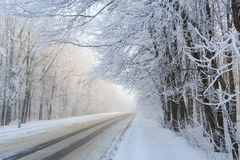 Road at the winter landscape in the forest Royalty Free Stock Image