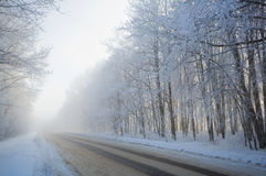 Road at the winter landscape in the forest Stock Photography