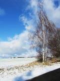 Road in winter Stock Photo