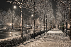 Road in the winter night Royalty Free Stock Photo